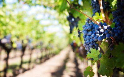 Oenotourisme : à la découverte du vignoble du Madiran