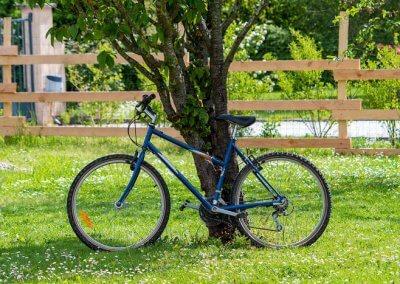 vélo contre un arbre
